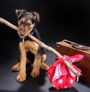 Urlaub mit hund bei greifswald for Pension mit hund nordsee